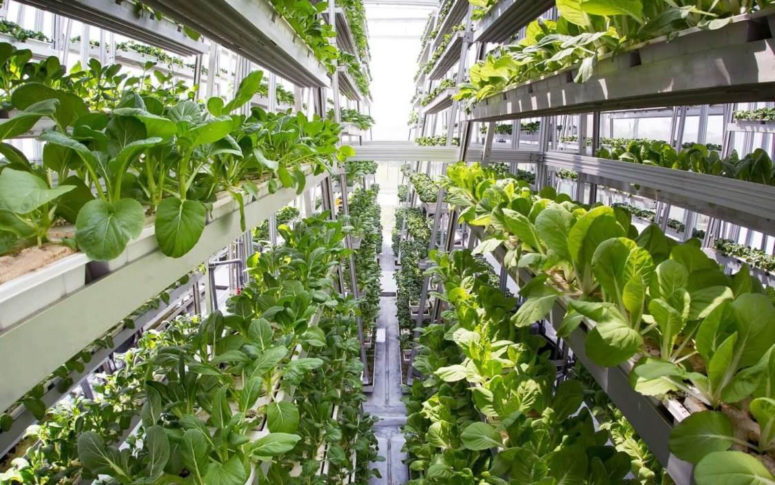Sky-Greens-Vertical-Farming